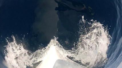 Prove and the blue sea