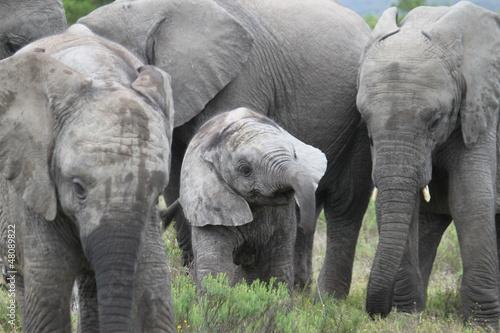 Fototapeten,elefant,herde,kalb,saeule