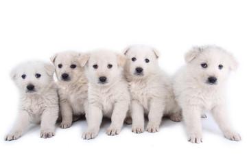 cucciolotti