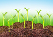 New life concept. Young seedlings growing in a soil.