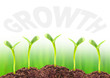 Young seedlings growing in a soil. Economic growth concept.