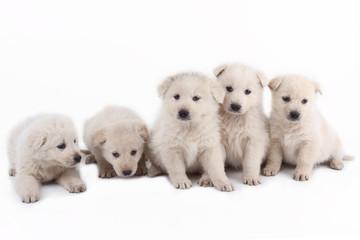 cuccioli teneri teneri