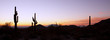 Saguaro Cactus at Sunrise Panoramic - 48108457