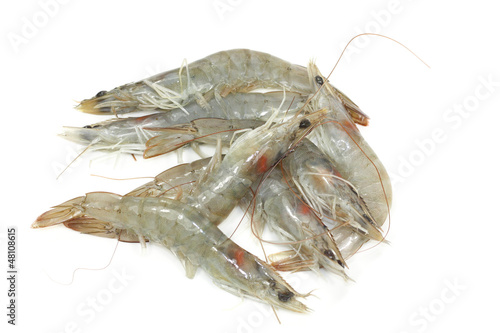 crevettes crues