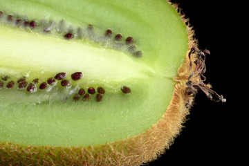 Kiwi Fruit Longitudinal Section on Black Background