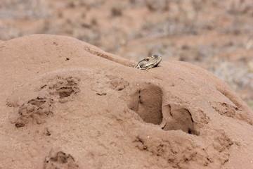 Waran im Termitenhügel
