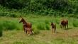 Pferd vid 04