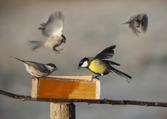 birds eating seed from bird feeder