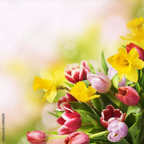 Foto op Canvas Narcis Spring Bouquet