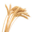 Isolated bunch of wheat