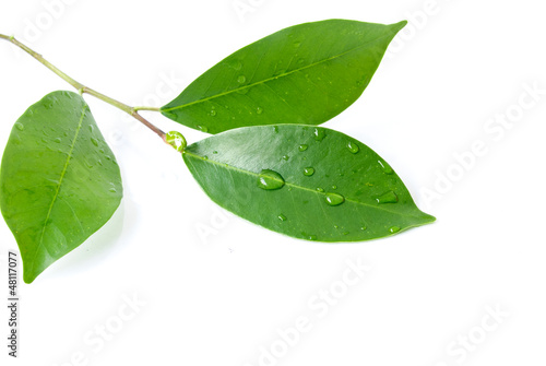 Leaf and water drop on the white background