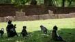 jumping monkeys in Anuradhapura, Sri Lanka