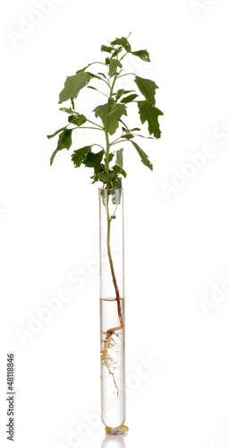 plant in test-tube isolated on white