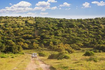 Safari Landscape