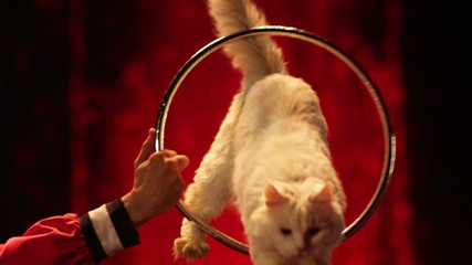 Cat jumps into the ring in circus.