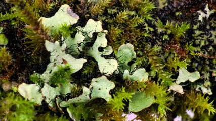 Mossy twig with lichen algae - mega macro closeup