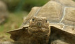 large image of a head of very big tortoise