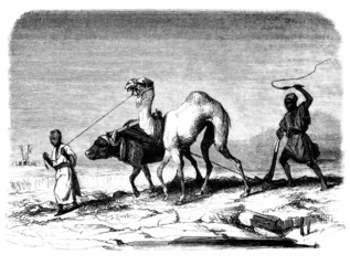 Traditional arabian Peasants - Laboureurs