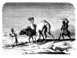 Traditional arabian Peasants - Laboureurs