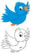 blue bird flying