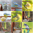 canvas print picture - Vögel im Garten