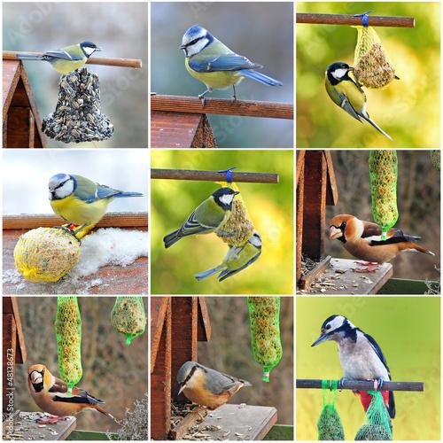 canvas print picture Vögel im Garten