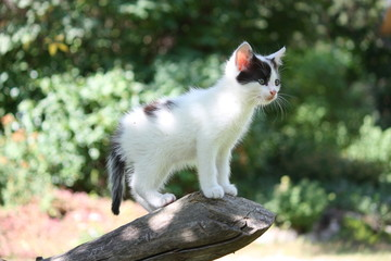 White kitten standing on the tree branch