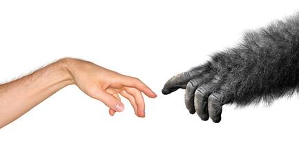 Evolution and origins concept