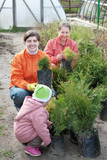 women and child chooses thuja sprouts