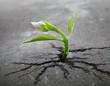 Little flower sprout  grows through urban asphalt ground