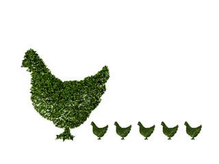 Pollo, agricoltura biologica, verde, ecologia, allevamento