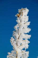 Landschaft mit Raureif, Frost und Schnee auf Baum im Winter.