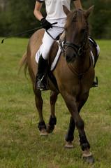 horse riding lesson