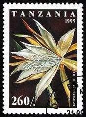 Postage stamp Tanzania 1995 Fishbone Cactus, Epiphyllum Darrahii