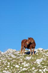 Cavallo solitario su una  collina