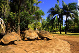 Giant turtles rest
