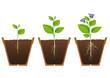 Fasi di crescita di una pianta