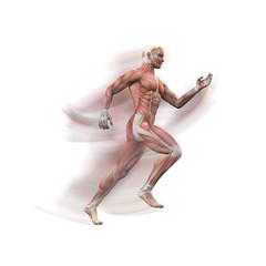 Mann, Sprinter Anatomie Muskeln 3D motion blur