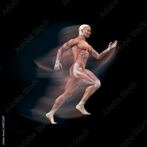 Mann, Sprinter Anatomie Muskeln 3D