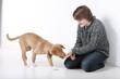 Jugendlicher gibt seinem Hund ein Leckerli