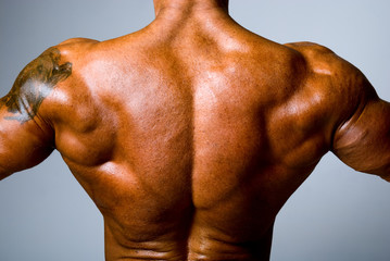 The back muscular man on gray background
