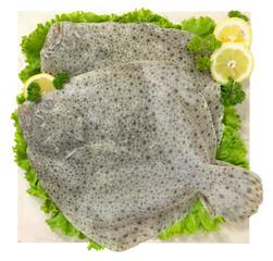 Rombo - Flatfish