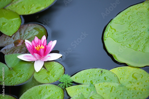 Canvas Lotusbloem Pink waterlily