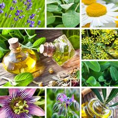 Heilpflanzen - Kräuter - Öl
