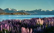 Lake Tekapo with Aroki Mt.Cook, New Zealand