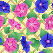 Seamless pattern with pink and violet flowers (petunias)