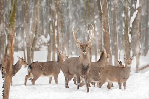 Deer - 48192004