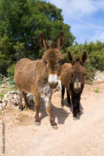Famiglia di Asini - Sardegna
