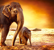 Fototapeten,elefant,elefant,asiatisch,asien