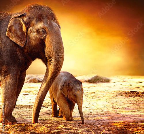 slon-matka-i-dziecko-outdoors